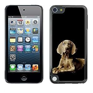 Vortex Accessory Carcasa Protectora Para Apple Ipod Touch 5 - Weimaraner Proud Grey Blue Eyes Dog -