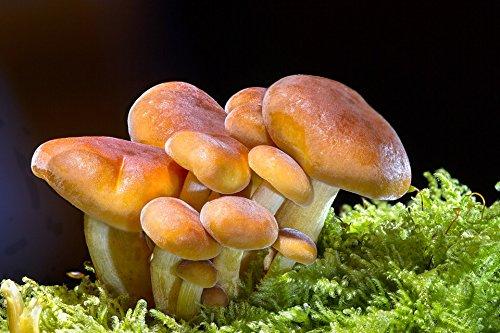 Home Comforts LAMINATED POSTER Sponge Wood Fungus Mushroom M