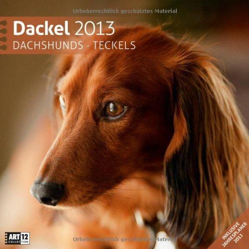 dackel-2013