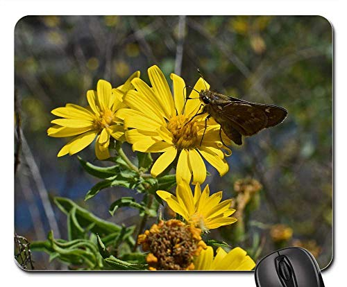 Mouse Pad - Silver-Spotted Skipper in Sunflower Butterfly Insect ()