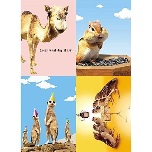Tree-Free Greetings Animal Antics Birthday Card Assortment, 5 x 7 Inches, 8 Cards and Envelopes per Set (GA31555)