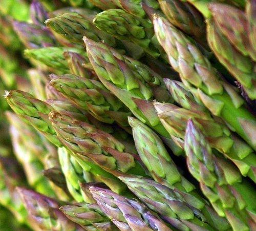 PREMIER SEEDS DIRECT - Asparagus - Mary Washington - 260 Seeds