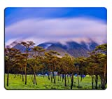 Luxlady Gaming Mousepad IMAGE ID: 34331687 Pine forest with mist and wildflowers field