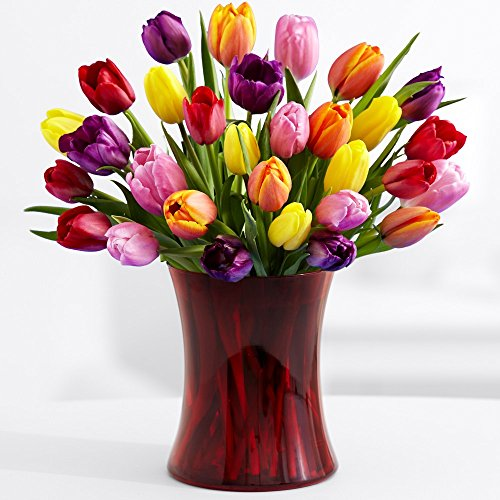 Tulips Vases Amazon Com