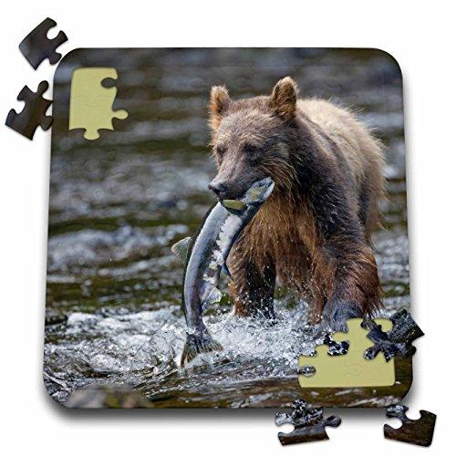 Sockeye Salmon Fishing (Danita Delimont - Bears - Alaska, Brown Bear, Sockeye Salmon in Pavlof Harbor - US02 PSO0624 - Paul Souders - 10x10 Inch Puzzle (pzl_87626_2))