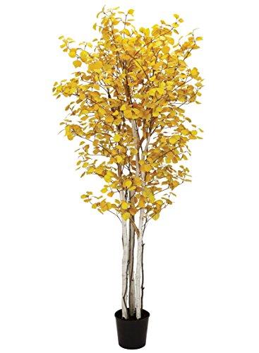 - Sullivans 0530T Yellow Aspen, 7 Feet x 40 Inches,