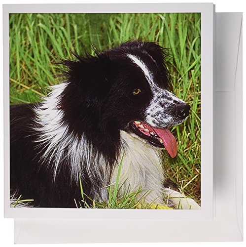 3dRose Border Collie - Greeting Cards, 6 x 6 inches, set of 12 (gc_1244_2) ()