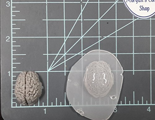 Human Brain (Small) Plastic Mold