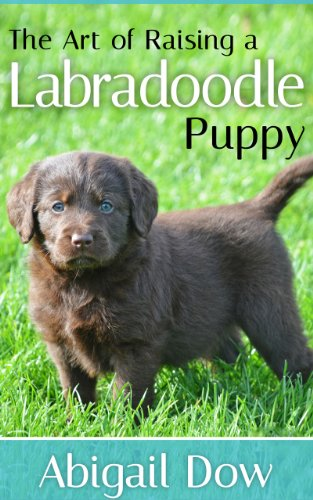 The Art Of Raising A LABRADOODLE Puppy From Puppyhood To Adult - 26 dogs puppyhood photos
