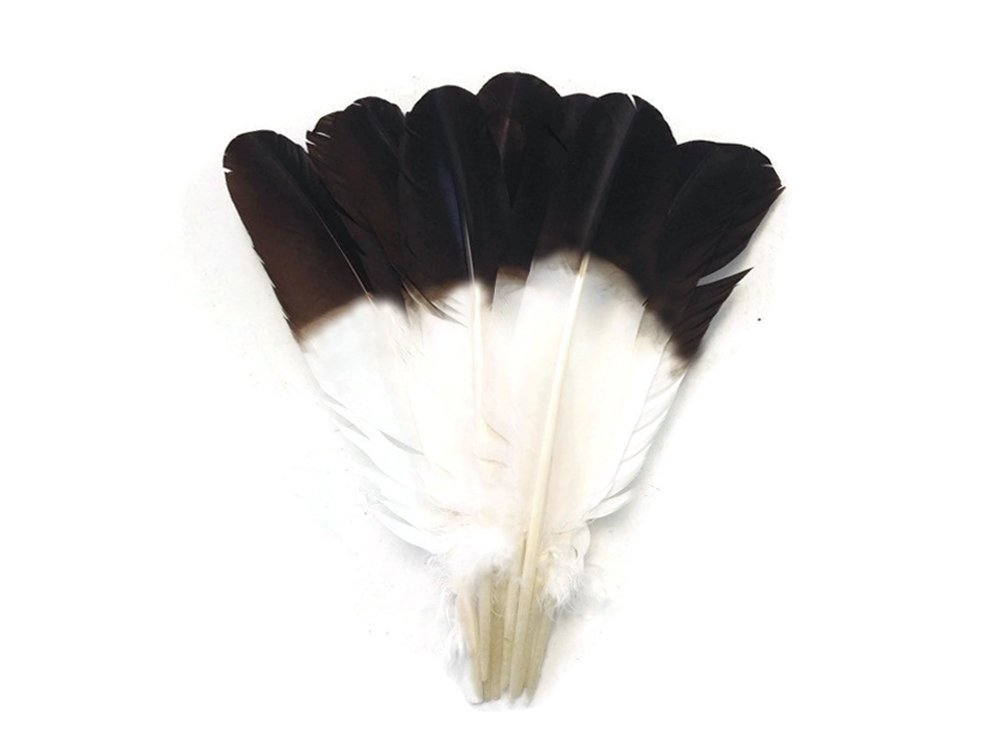 Moonlight Feather | 1/4 Lb - Imitation Eagle Feathers - White Tom Turkey Rounds ''Eagle'' Brown Tipped Feathers Indian Craft, Headdress, Halloween Costume