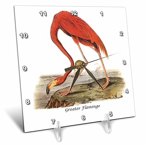 3dRose dc_114101_1 Greater Flamingo by John James Audubon-Desk Clock, 6 by 6-Inch