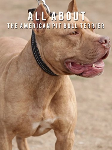 All About The American Pit Bull Terrier