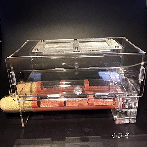 30200mm Large Size Bamboo Glass Tubes Ants Nest Ants Castle Workshop Children Science Biological Device Granja de hormigas