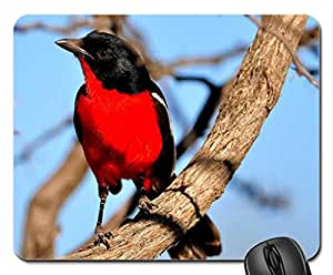 Crimson Breasted laniidae Mouse Pad, Mousepad (Birds Mouse Pad)