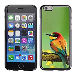 FlareStar Colour Printing Songbird Green Spring Tropical Wings cáscara Funda Case Caso de plástico para Apple (5.5 inches!!!) iPhone 6 Plus