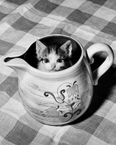 Kitten peeking out of a pitcher Poster Print (18 x 24) (Pitchers Kitten)