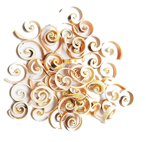 East-J 35 pcs Sliced Strombus Luhuanus Crosscut (Crafts or Jewelry - Sliced Shell