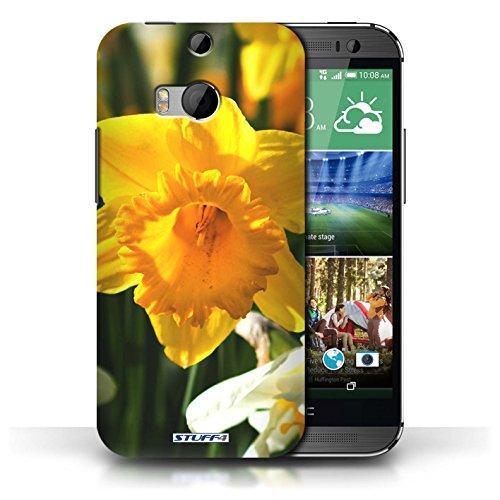Etui / Coque pour HTC One/1 M8 / jonquille conception / Collection de floral Fleurs