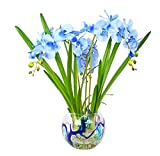 Blue Cybidium Orchid with Orchid Leaves In Multi-Color Round Glass Vase