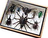 REAL TARANTULA SPIDER AND MIXS INSECT TAXIDERMY SET