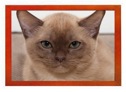 - PUPBEAMO Burmese cat Animal - #42009 -Art Print Picture Frame Photo Frames Made of Solid Wood For Table Top (Walnut,9x7 Inches)