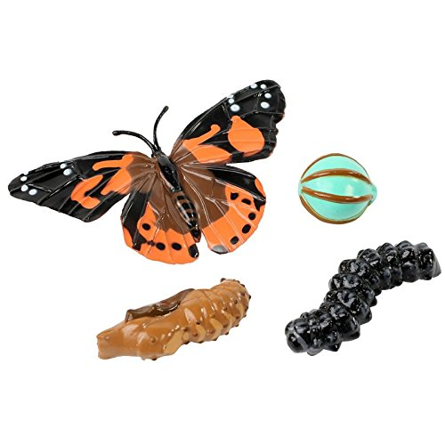 Insect Lore Butterfly Learning Toy - 4 Piece Set Shows Metamorphasis Of A Butterfly