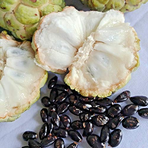 50 Seeds Custard Apple annona squamosa Sugar Apple from ()