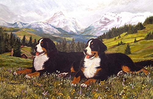 Bernese Mountain Dog Limited Edition Print