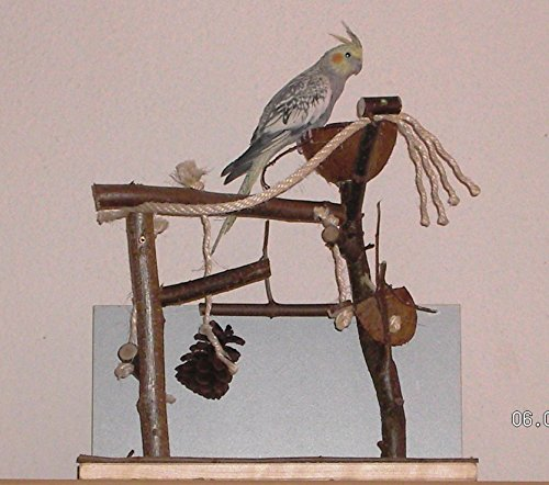 XL Erlebnis-Vogelspielplatz. Das Sittichspielzeug aus Naturholz ist der Renner bei Wellensittich, Nymphensittich & Co.
