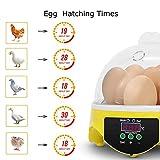 Egg Incubator for Kids,7 Eggs Poultry Hatcher