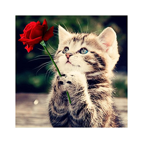 Naughty Kitten Cat Rose 5D Diamond DIY Painting Craft Home Decor
