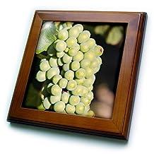 Danita Delimont - Grapes - Grape vines at Mission Hill Family Estate, Kelowna, BC, Canada. - 8x8 Framed Tile (ft_205912_1)