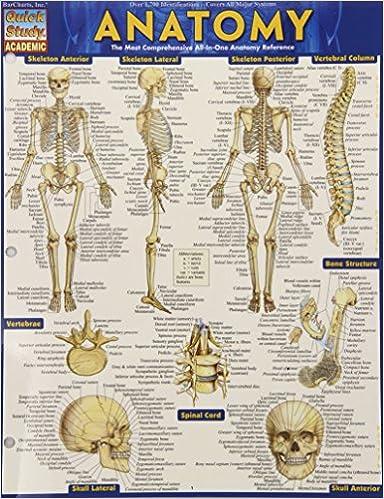 Anatomy (Upd)