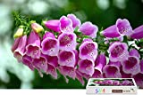 Sim,Wooden With Glue Perfect Choice for the Puzzle Lover - Beautiful Pink Bells Flowers,34.4 X 22.6 inch - 1500 Piece Jigsaw Puzzle