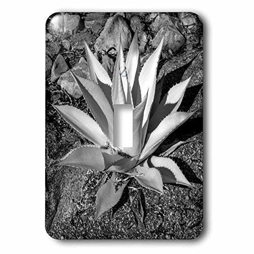 Danita Delimont - Plant - USA, Arizona, Scottsdale, Mayo Clinic Campus - Light Switch Covers - single toggle switch - Arizona Outlet Scottsdale