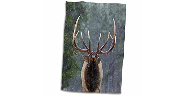 Amazon Com 3d Rose Rocky Mountain Bull Elk Making Face Hand Towel 15 X 22 Home Kitchen