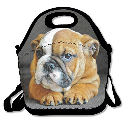 bulldog lunch box - 3