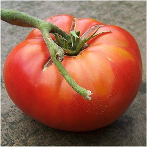 brandywine tomato seeds - 5