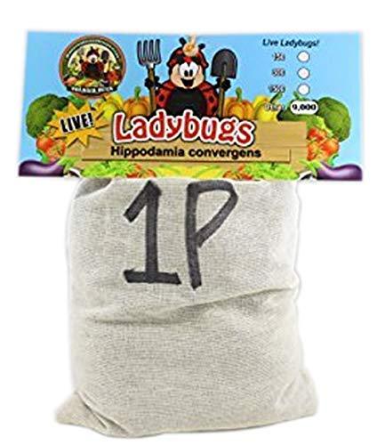 9,000 Live Ladybugs & Ladybug Life Cycle Poster - Ladybugs Are Guaranteed Live Delivery! -