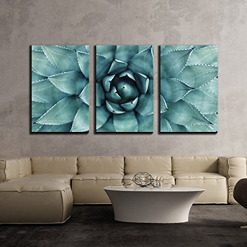 Sharp Pointed Agave Plant Leaves x3 Panels