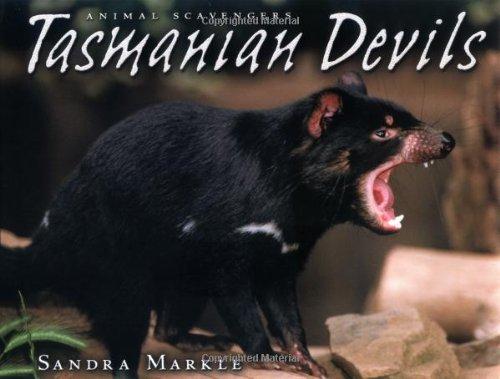 Tasmanian Devils (Animal Scavengers)