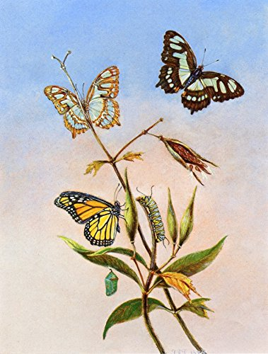 Butterflies by Titian Ramsey Peale Ii - 20