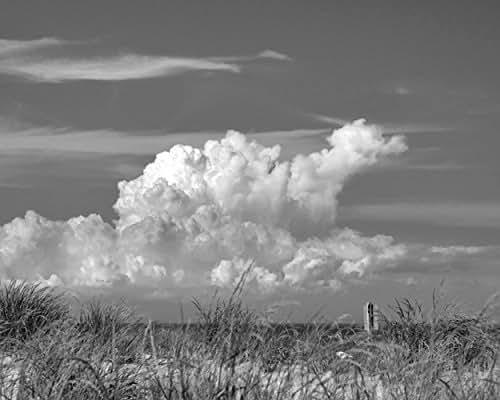 Amazon.com: Black and White Art, Coastal Photography Print