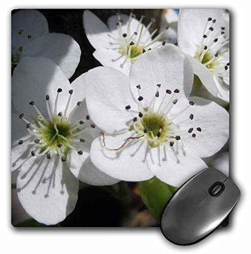 3drose-llc-8-x-8-x-025-inches-mouse-pad-white-flowering-tree-floral-macro-flowers-mp-31349-1