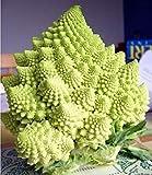Italian Heirloom ORGANIC Broccoli ROMANESCO ITALIA
