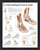 wallsthatspeak Understanding the Foot and Ankle Framed Medical Educational Informational Poster Diagram Doctors Office School Classroom 22x28 Inches