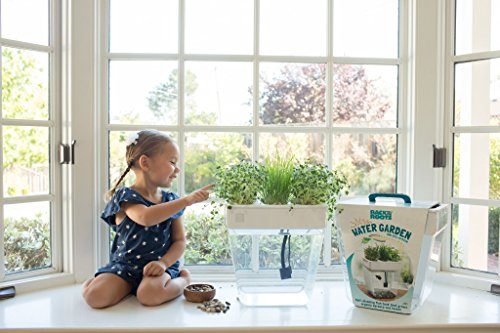 Back to the Roots Water Garden Betta Fish Tank, 3 Gallon. Hydroponics Growing System. Fish tank with Organic Aquaponic Sprouts and Herbs Aquarium Starter Kit. Great for Kids