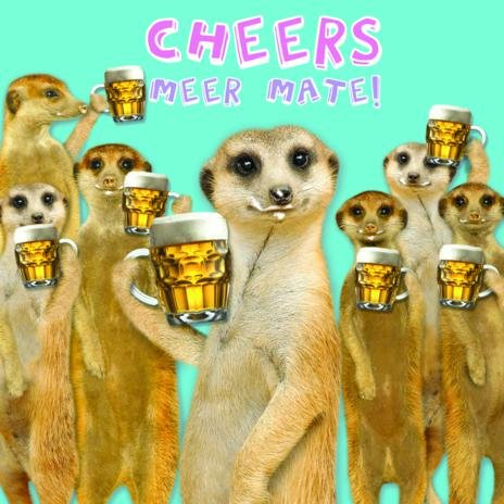 Chill Out Meerkat Birthday Card Amazon Kitchen Home