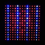 LEDwholesalers 2501QUAD Blue/Red/Orange/White 225 LED 13.8 Watt Square Grow Light Panel 110 Volt