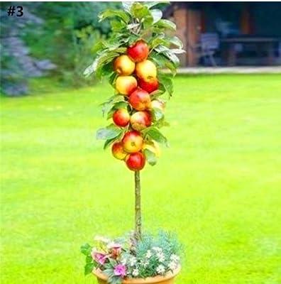 Kofun Flower Vegetable Fruit Seeds Petal Plants Home Garden Yard Decor Goldfinger Grape Seed - Black 1 Bag